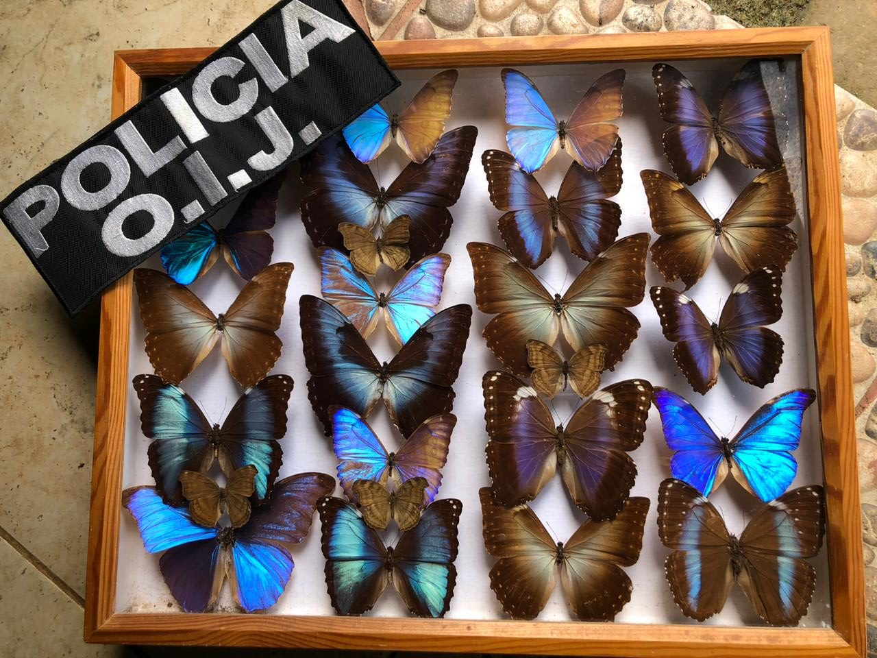 Operation against wildlife trafficking between Costa Rica and Europe